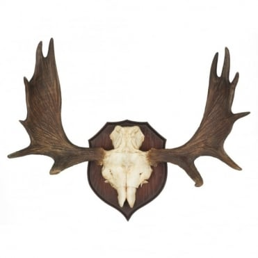 BAVARIAN - Stag Antler Wall Sculpture